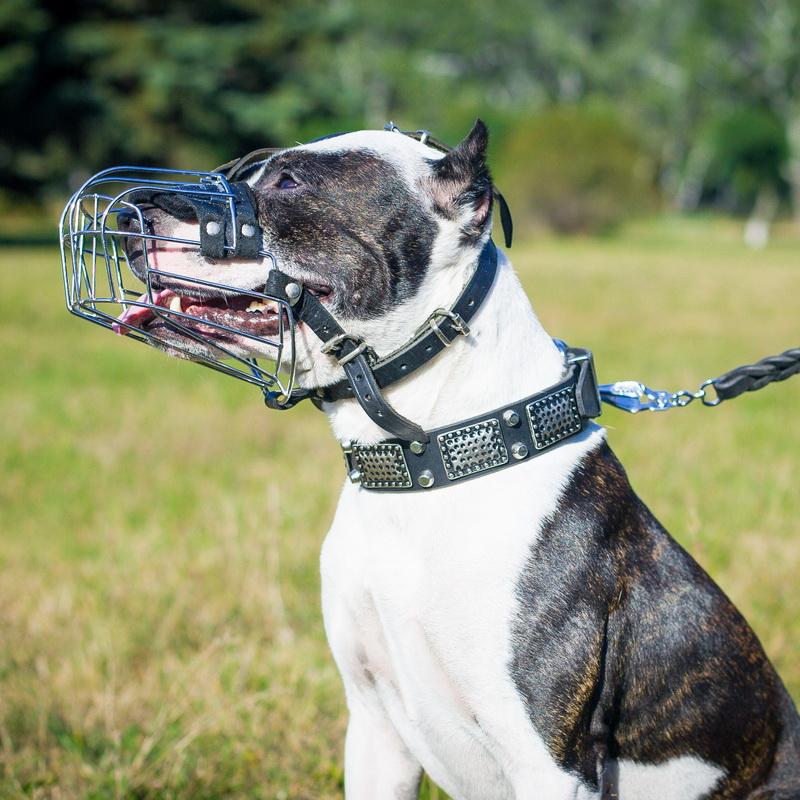 Muselière grillagée pour chien Pitbull «Universelle»